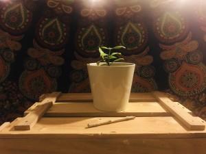 FreaksPflanze